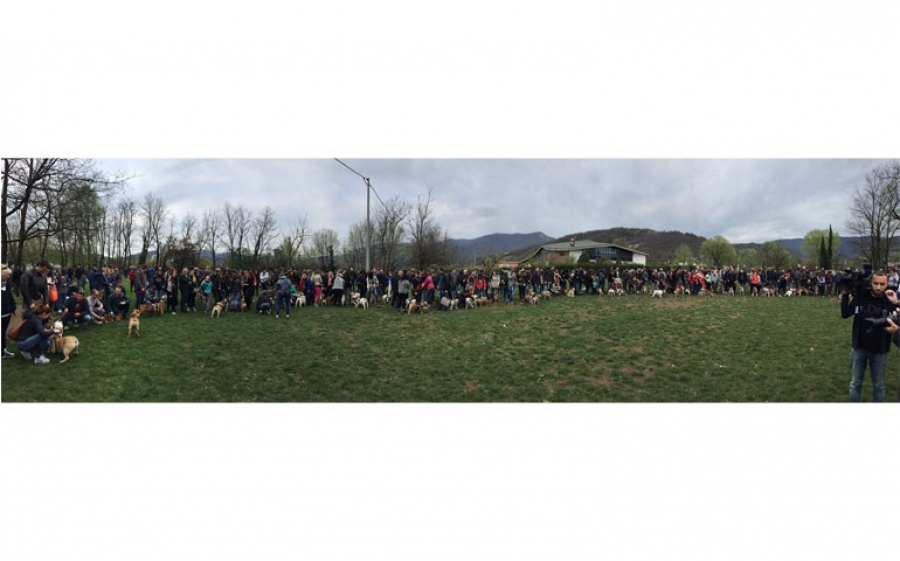 #BulldogDay, al Parco Esposizioni Novegro una giornata dedicata ai nostri amici a quattro zampe