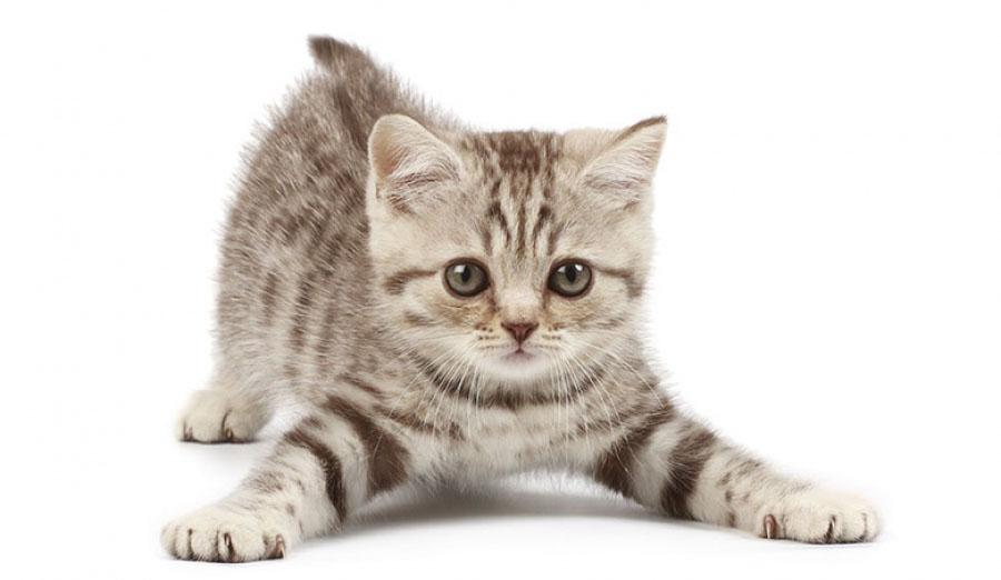 È in arrivo la Festa del Gatto!