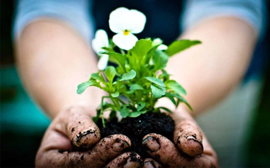 #GardenChat e #SeedChat Su Twitter