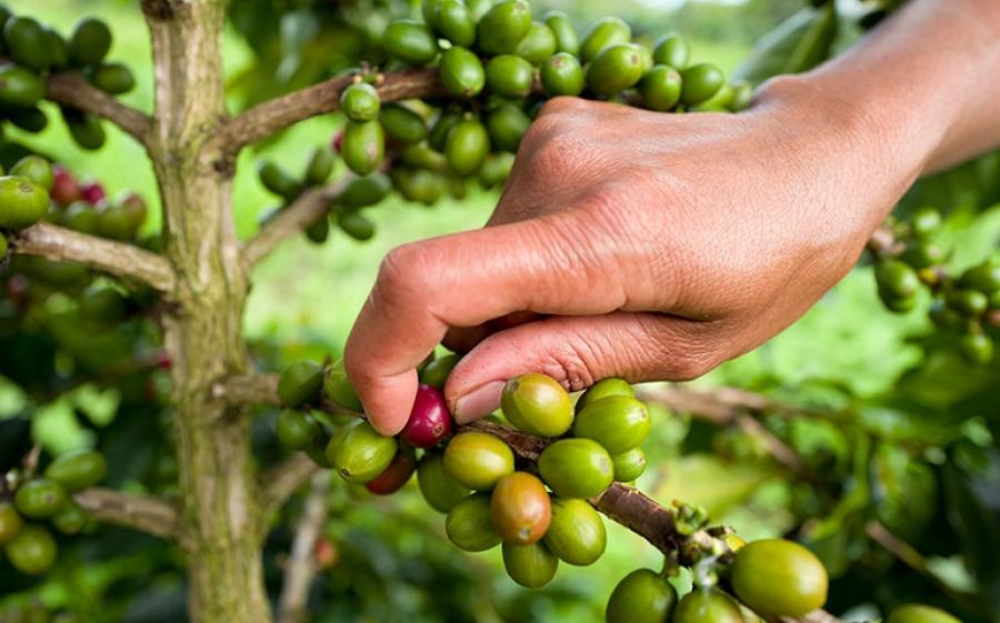 Master Origin – La nuova gamma Nespresso che fa scoprire i territori d'origine del caffè