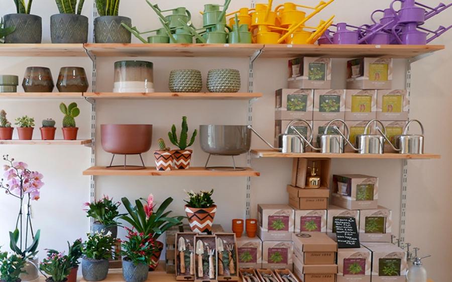 WILD - Living with plants, L'houseplant boutique per gli appassionati del verde
