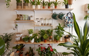 WILD - Living with plants, L'houseplant boutique per gli appassionati del verde