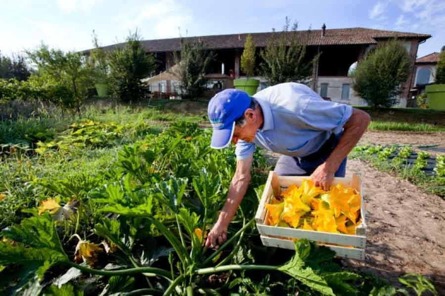 Farmer food & Design Experience
