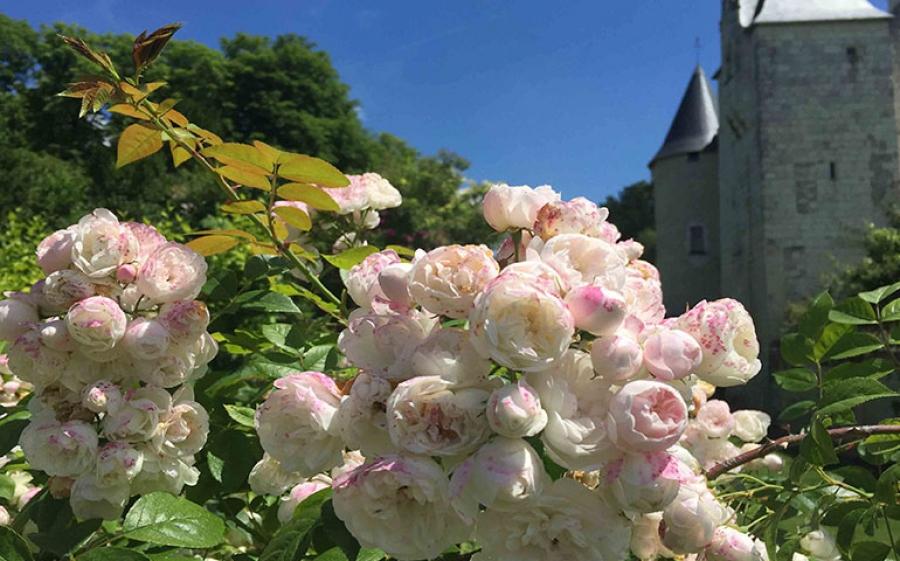 Festa delle Rose: il 2 e il 3 giugno al Castello di Rivau